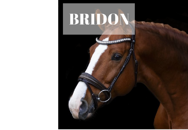 bridon-c.png